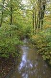 Strumienia kurs w lesie autumnally zdjęcia stock
