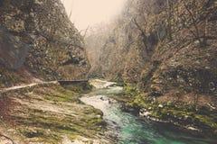 Strumienia przepływu góry i lasu stopa zakrywająca w mech Zdjęcie Stock