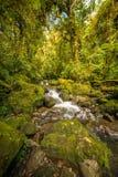 Strumienia spływanie przez zielonej foremki skał fotografia stock
