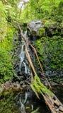 Strumienia spływanie przez zielonej foremki skał obraz stock