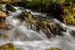 Strumienia spływanie w lesie obraz stock
