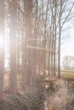 Strumyk i drzewa Zdjęcia Royalty Free