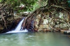 Strumyk w dolinie przy Yanoda tropikalnym lasem deszczowym Obraz Stock