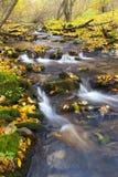 Strumyk w jesieni Zdjęcia Royalty Free