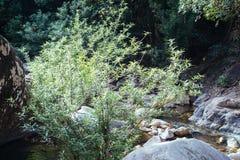 Strumyk w lesie Fotografia Stock