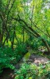 Strumyk w lesie Obraz Royalty Free