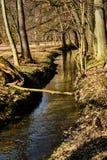 Strumyk w lesie zdjęcia stock