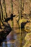 Strumyk w lesie zdjęcie stock