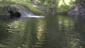Strumyk w natura basen zbiory