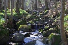 strumyka las Obrazy Stock