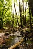 Strumyki w lesie obraz royalty free