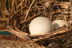 Strusi jajka koszykowi Zdjęcia Royalty Free
