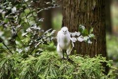 Strusia twarz gniewny bird obraz royalty free