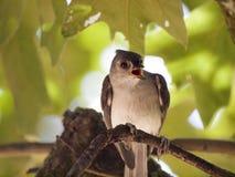 Strusia twarz gniewny bird obrazy stock