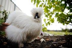 Strusia twarz gniewny bird zdjęcie royalty free