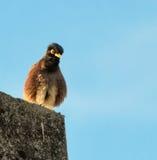 Strusia twarz gniewny bird fotografia royalty free