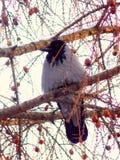 Strusia twarz gniewny bird obrazy royalty free