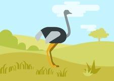 Strusiej płaskiej projekt kreskówki wektorowi dzicy ptaki ilustracja wektor