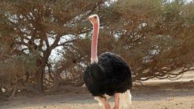 Struts i söder av Israel Royaltyfria Bilder