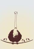 Struts och små fåglar Royaltyfri Fotografi