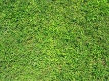 Struttura 1 dell'erba Fotografie Stock Libere da Diritti