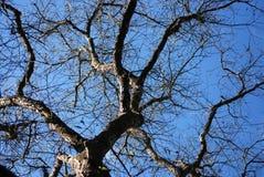 Struttura ad albero Fotografie Stock
