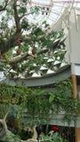 Struttura ad albero artificiale, specchi, tucano Fotografie Stock