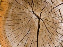Struttura ad albero interna fotografia stock libera da diritti