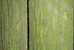 Struttura ad albero vecchio Vernice verde Immagini Stock
