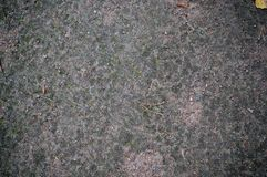 Struttura al suolo della foresta con muschio Fondo Immagine Stock