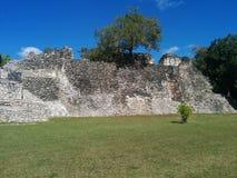 Struttura alta con l'albero che cresce sulla cima in rovine maya di Kohunlich Fotografia Stock