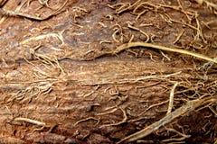 Struttura alta vicina della noce di cocco Fondo di macro della noce di cocco Fibre di noce di cocco Immagine Stock