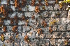 Struttura antica della parete con muschio e l'edera delle piante, concetto della via delle montagne dell'Italia fotografie stock