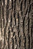 Struttura approssimativa dell'albero Fotografie Stock Libere da Diritti