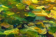 Struttura arancio verde della pittura ad olio del primo piano dell'estratto su tela immagine stock