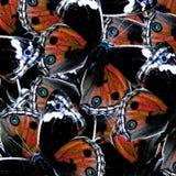 Struttura arancione scuro esotica del fondo fatta da Pansy Butte blu Immagini Stock