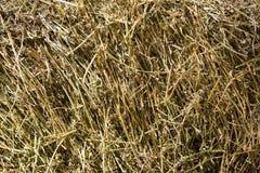 Struttura asciutta del primo piano della paglia Agricoltura del fondo Fotografia Stock