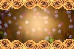 struttura asciutta della rosa di bianco sul bokeh della stella della sfuocatura Fotografia Stock