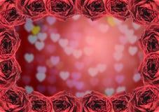 struttura asciutta della rosa rossa sul fondo del bokeh del cuore della sfuocatura Fotografia Stock