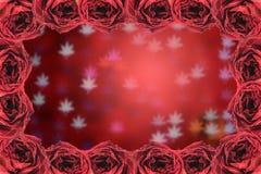 struttura asciutta della rosa rossa sul fondo del bokeh della sfuocatura Immagini Stock Libere da Diritti
