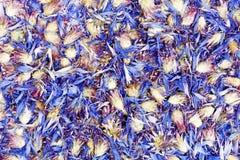 Struttura asciutta delle foglie della centaurea Foto del primo piano Fotografia Stock Libera da Diritti