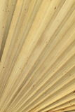 Struttura asciutta delle foglie di palma Fotografia Stock