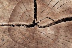 Struttura astratta del ceppo di albero, legno della crepa antico immagine stock libera da diritti