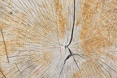 Struttura astratta del fondo di recente del legno del taglio della motosega Immagini Stock Libere da Diritti