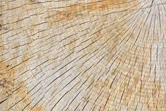 Struttura astratta del fondo di recente del legno del taglio della motosega Immagine Stock