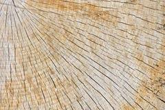 Struttura astratta del fondo di recente del legno del taglio della motosega Fotografia Stock Libera da Diritti
