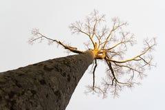 Struttura astratta dell'albero fotografie stock