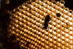 Struttura astratta della cera dell'ape Fotografia Stock Libera da Diritti