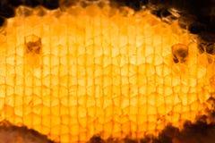 Struttura astratta della cera dell'ape Fotografia Stock