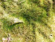 Struttura astratta della natura Fotografia Stock
